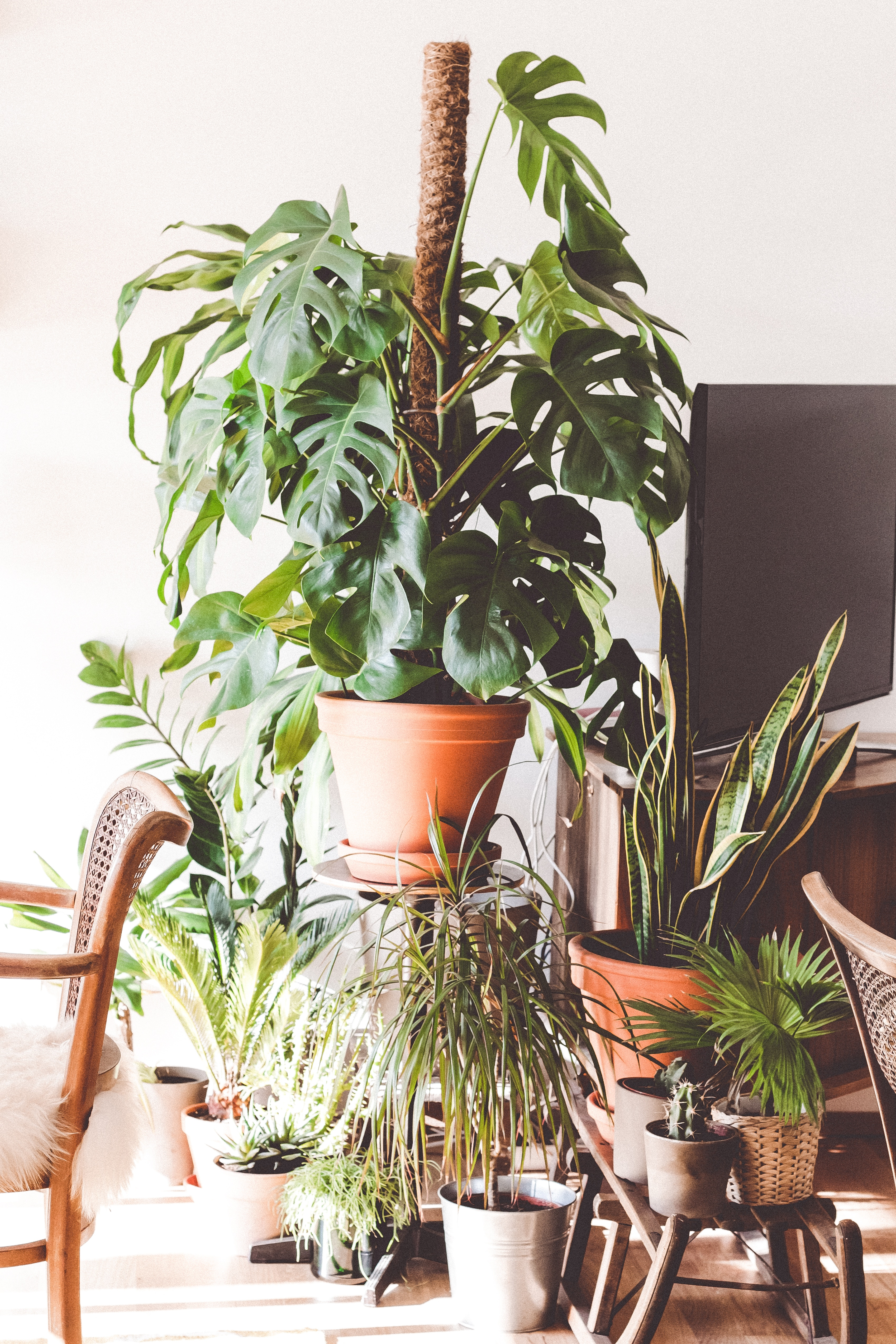 Vacation Tips For Apartment Gardening