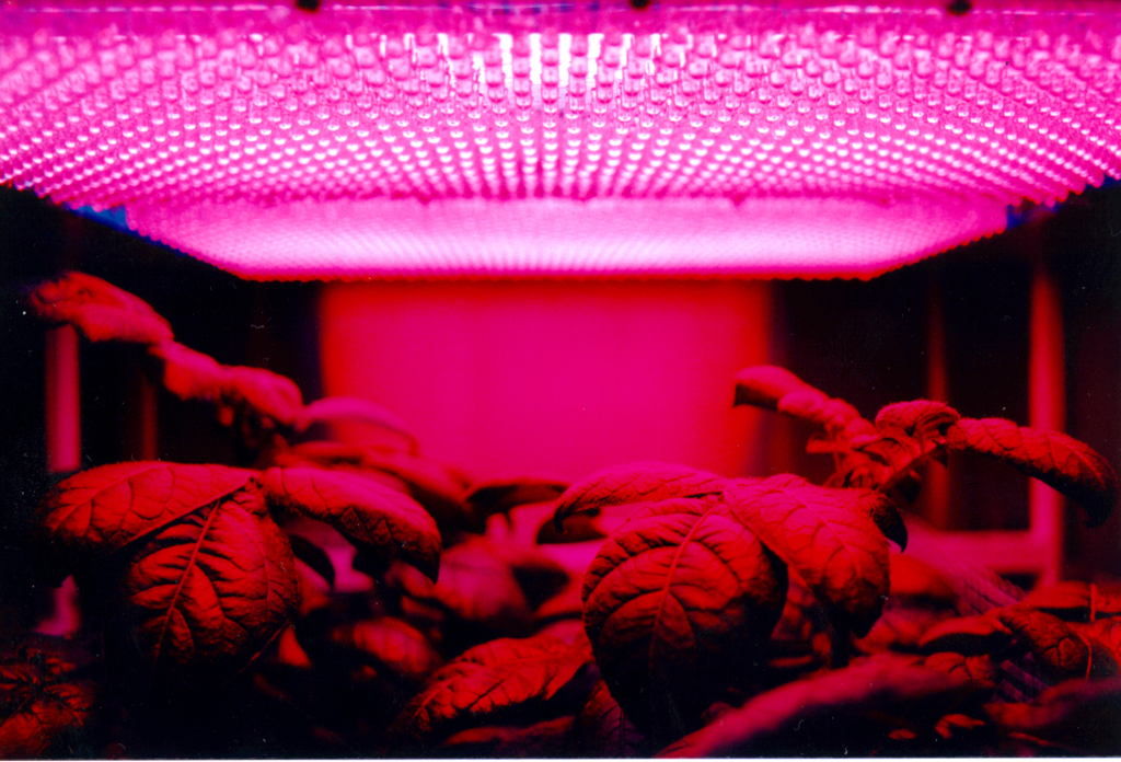 Pros of led grow lights for apartment gardening apartment pros of led grow lights for apartment gardening workwithnaturefo